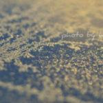 初心者でも撮れる 一眼レフでマクロ撮影 光を生かす写真術 その8  霜を撮る編